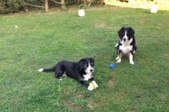 comportementaliste chien éducation canine au clicker à Allinges (chablais) - Gard éduc canin