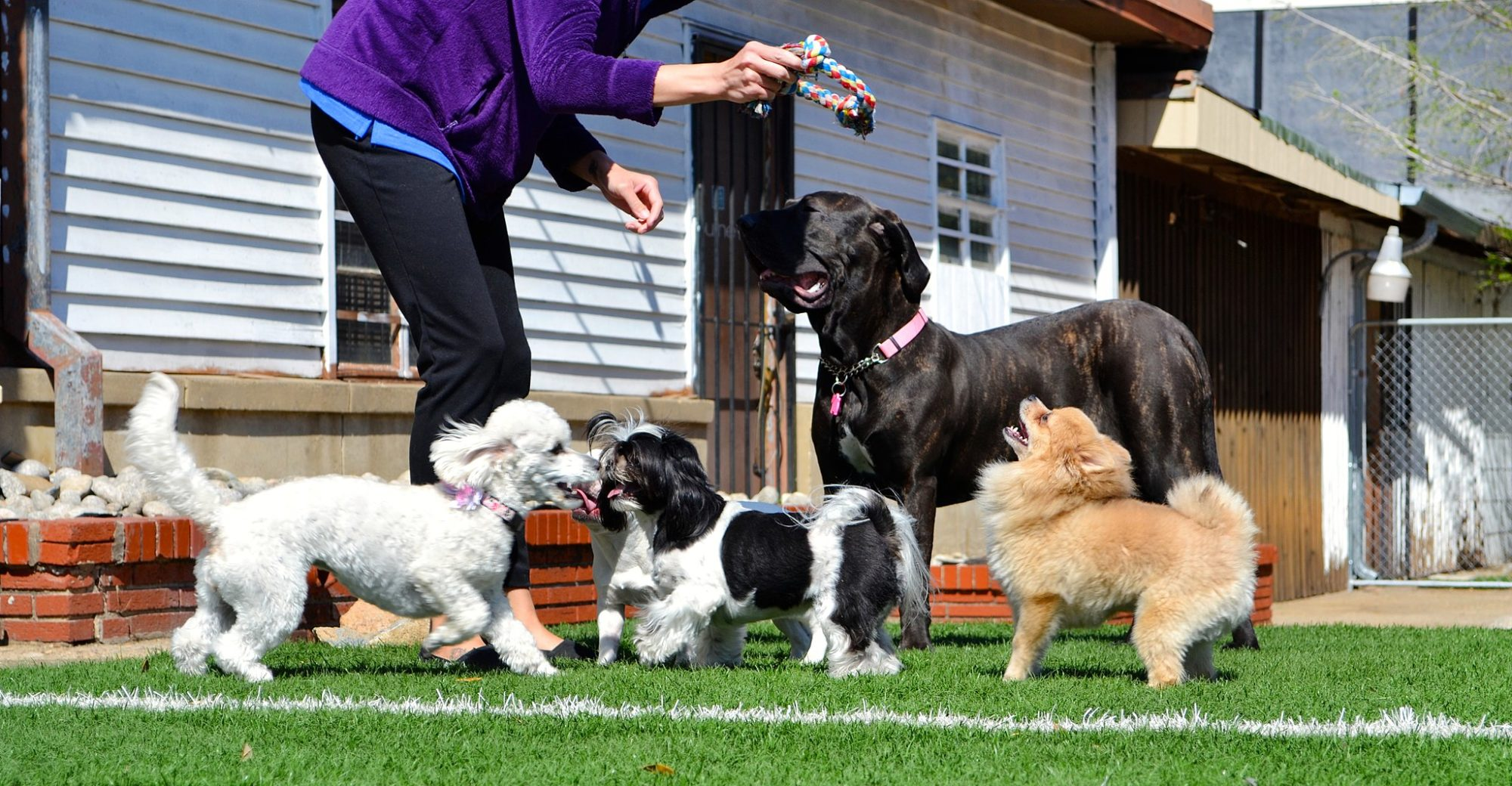 Garde et éducation canine