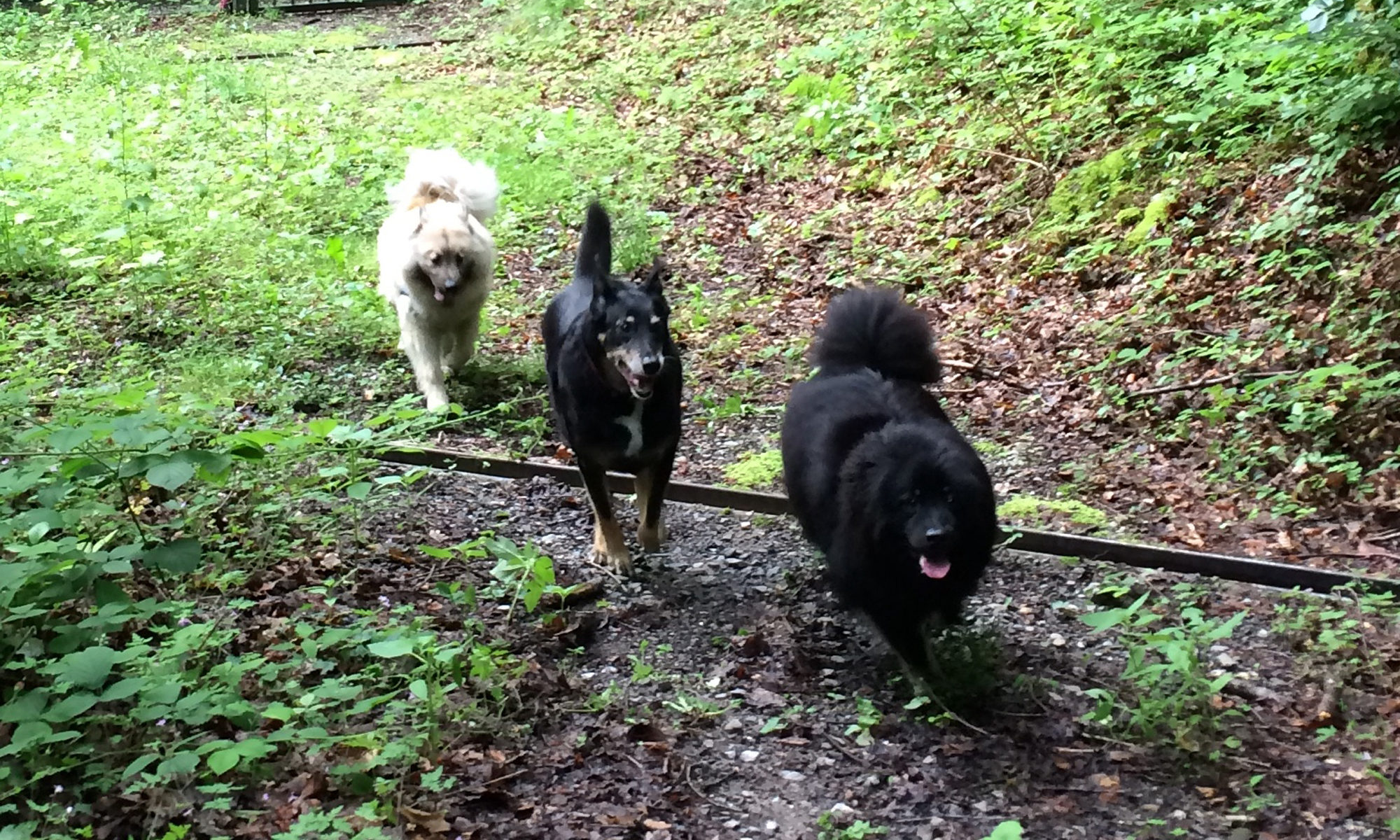 sortie - garde familliale, éducateur et comportementaliste canin à Allinges