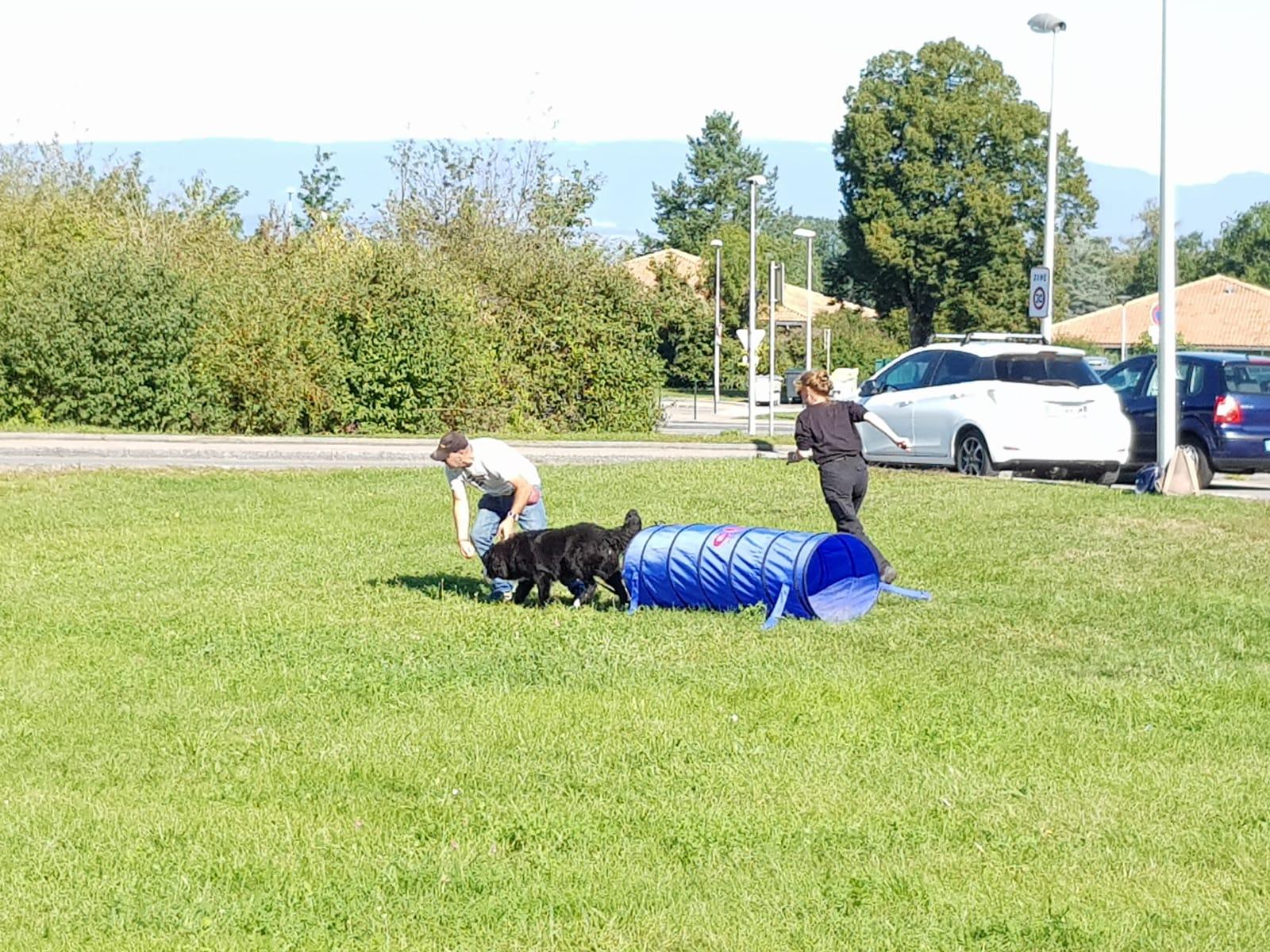 agility - garde familliale, éducateur et comportementaliste canin à Allinges
